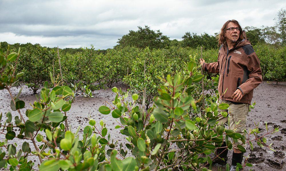 Lenine comanda mutirão de replantio em mangue na Baía de Guanabara