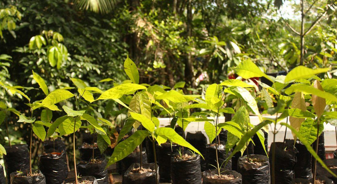 Plantio Ambienta